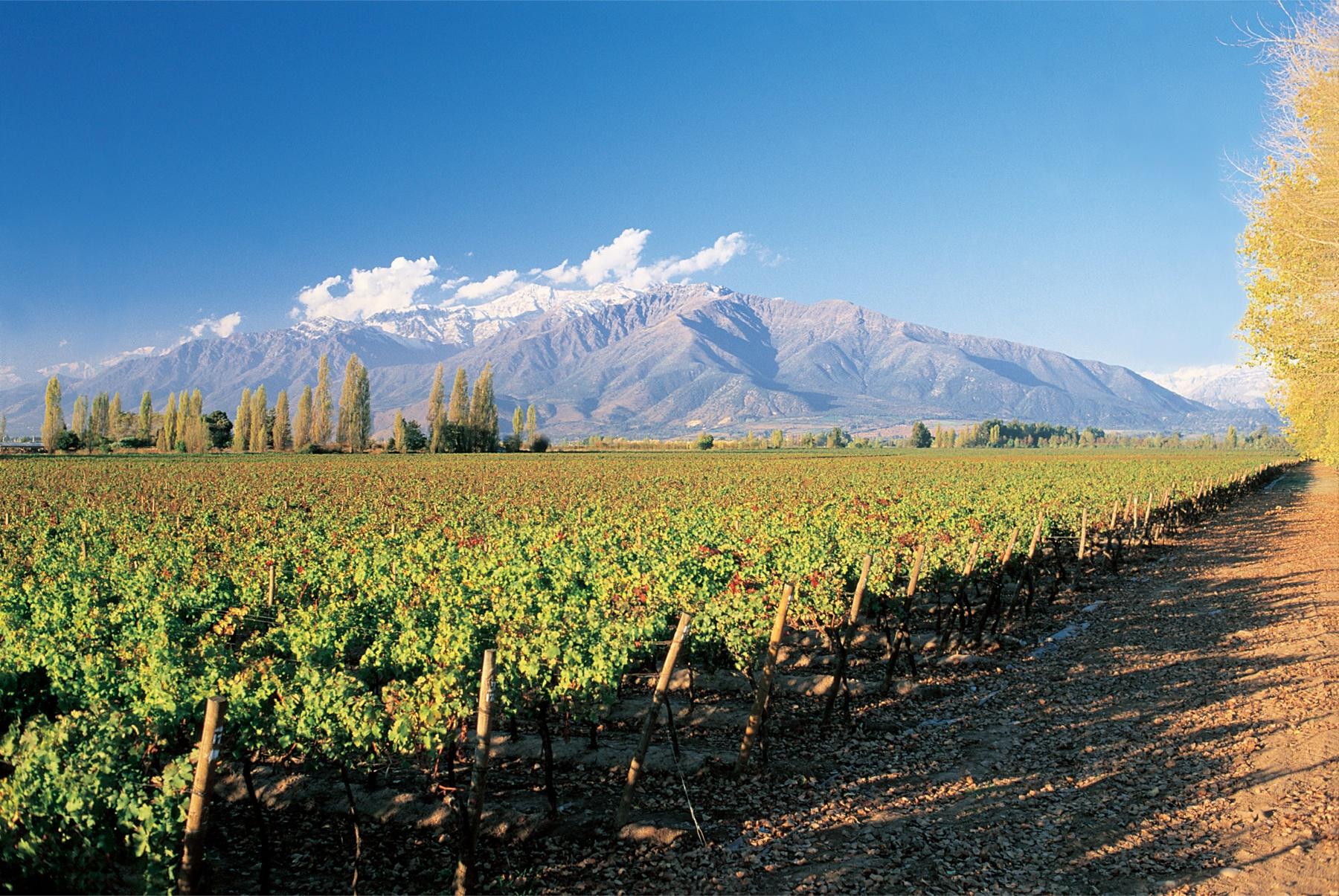 route des vins chili