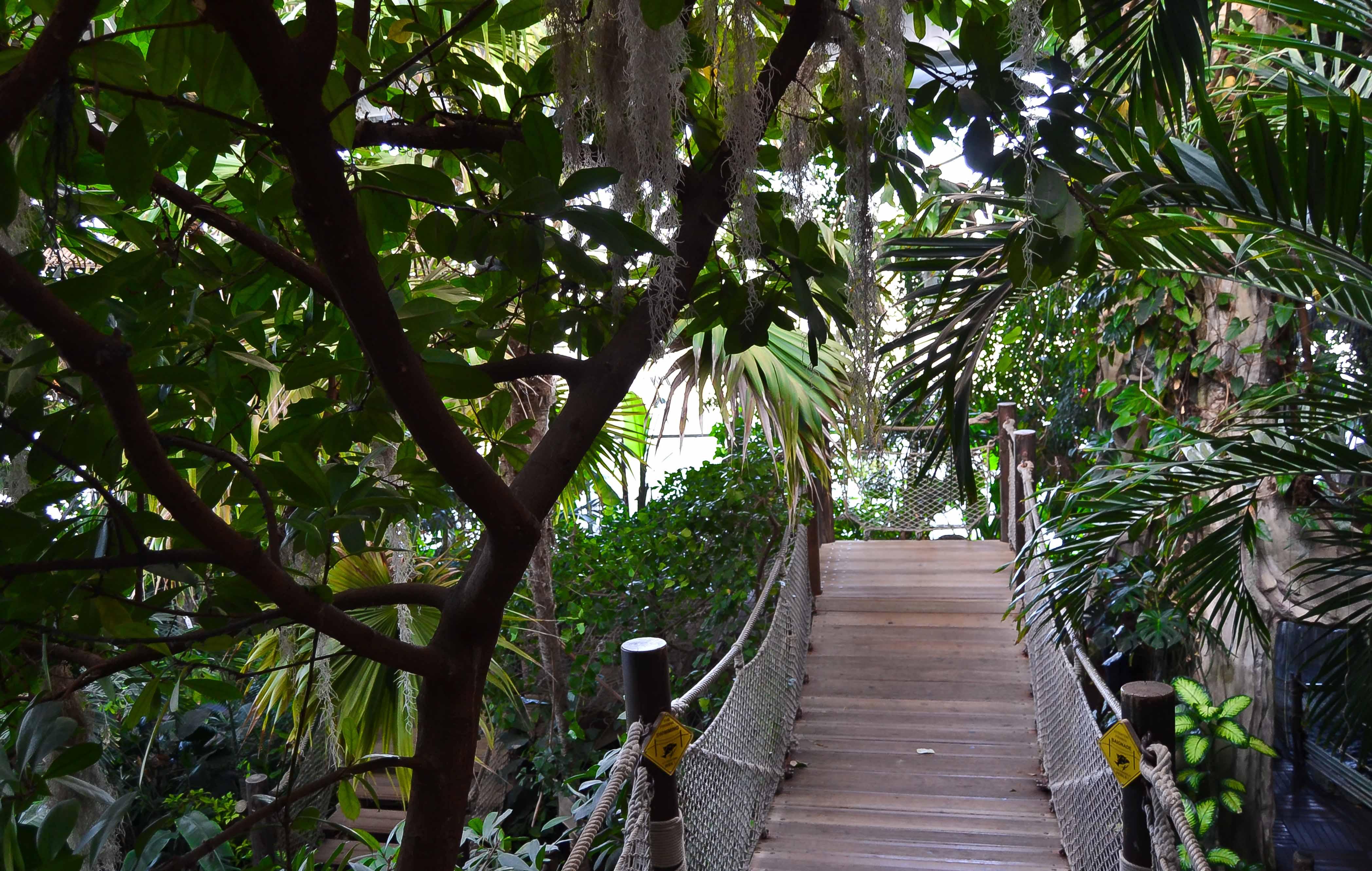 Fôret tropicale Aquarium de la rochelle