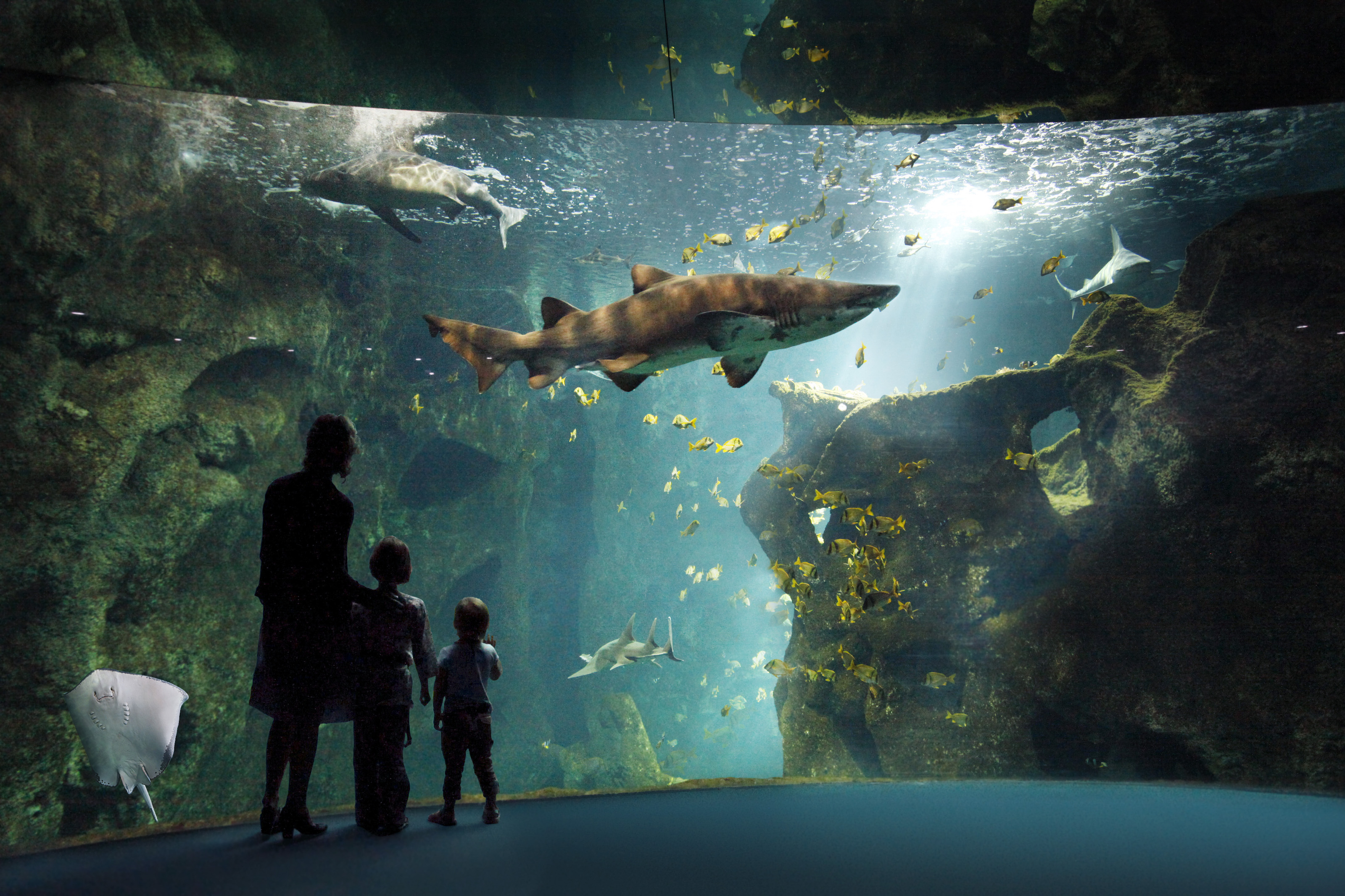 amphithéatre des requins (c) aquarium la rochelle SAS