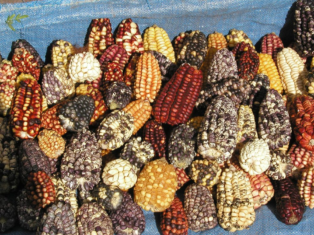 gastronomie Péruvienne-maïs-©Flikr Brian Snelson