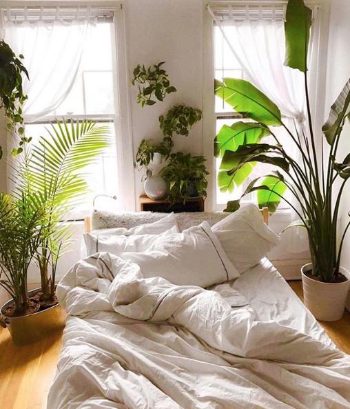 quelle plante dans ma chambre d'écran 2019-03-04 à 11.46.03
